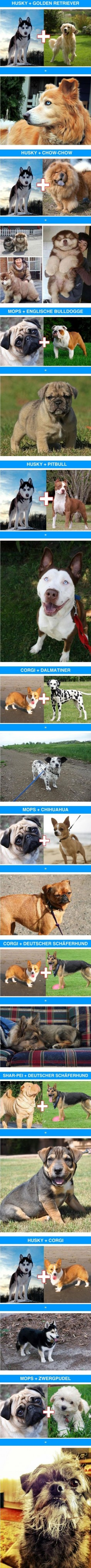 Cute & funny cross-breeds