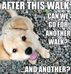 Cute puppy meme! Such a funny loldog ~ pretty much the cutest puppy ever!