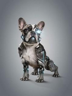 Cyber Dog l StudioNuts by Thiago Storino, via Behance