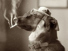 Did You Know That Second-Hand Smoke Kills Pets, Too? | petMD