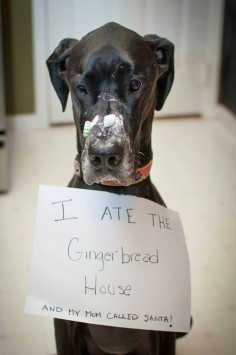 Disobedient dogs who are definitely on the Naughty list this year!