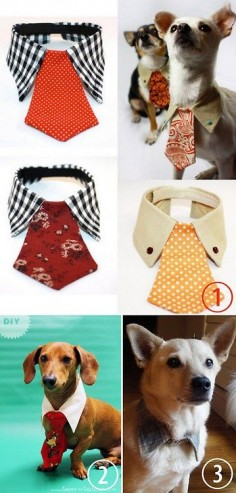 DIY: Dog Tie and Collar.