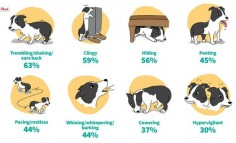 Do you know the signs of anxiety in your dog? (Funny, Montana does all of  baby.)