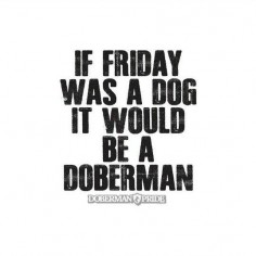 Dobermans are the best! So are Fridays! #doberman #dobermanpinscher #dobermanpride
