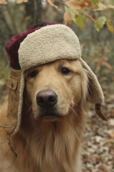 Does this hat make me look fat? (Best ever collection of true animal rescue stories called Last Stop on Rainbow Bridge on Amazon.)