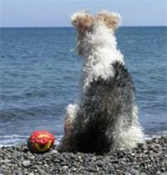 Dog on Whitby Beach Yorkshire