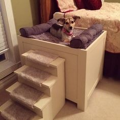 dog platform bed with stairs - Google Search