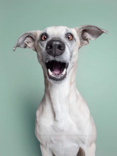 Dog Portraits by Elke Vogelsang
