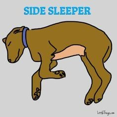 Dog sleeping positions