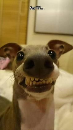 Dog smiles
