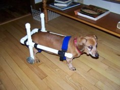 Dog Wheelchair, Dachshund WheelChairs, small dog wheelchairs, pet wheelchairs