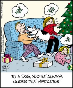 Dog Xmas