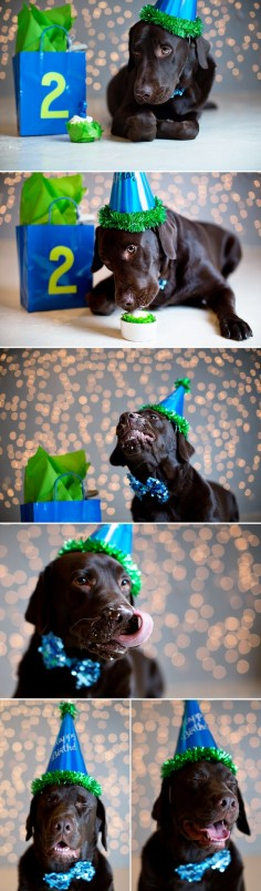 doggie birthday photo session PRECIOUS! I'll have to do this.