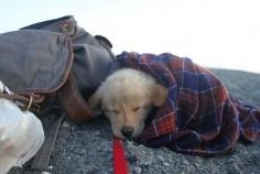 doggie camper.