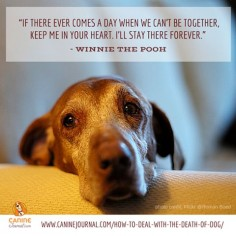 Dogs Never Die, They Are Just Sleeping In Your Heart. Our dogs bring so much companionship, support, and love into our lives that it's natural to grieve when a dog dies.