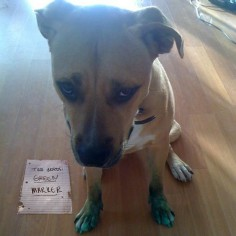 dogs with signs of shame | Dog Shaming showcases bad dogs posing with a sign that states their ...