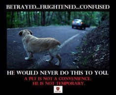 Don't abandon your  or ANY animals!! Ever!!