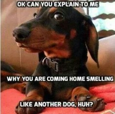 Don't be jealous, it was a puppy! #dogs #pets #Dachshunds