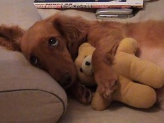 Don't take away my bear.