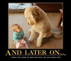 Doodle wisdom #goldendoodle #dogs #cute love this!