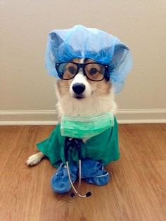 "Dr. Corgi says: ""You fell off the woof and broke a bone? Sounds ruff."" / via"