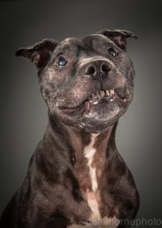 Elmo | A Photographer Is Taking The Most Adorable And Touching Pictures Of Incredibly Old Dogs