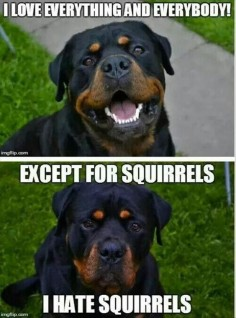 Except squirrels