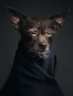 "Expressive Portraits of Animals Reflect Powerful ""Human"" Emotions - My Modern Met"