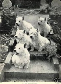 Five Westie West Highland Terrier Dogs in A Garden 1934 Vintage Dog Photo Print