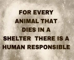 For every animal that dies in a shelter there is a human responsible.
