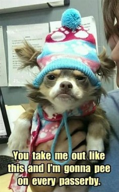 FUNNY ANIMAL PICTURES – 33 PICS