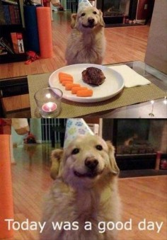 FUNNY ANIMAL PICTURES OF THE DAY – 19 PICS — BEST FROM NATALI ASTAR
