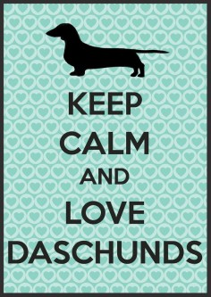 Funny dachshunds isn't even spelled right but I'll repost anyways of course :)