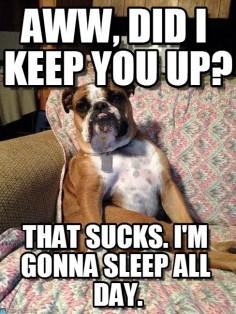 funny #English #Bulldog