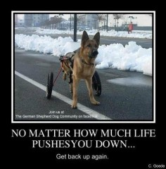 funny german shepherd pictures | Funny GSD Picture Signs - Laugh, Cry, Be Proud - German Shepherd Dog ...