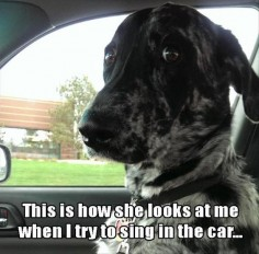 Funny Pictures Of The Day 66 Pics