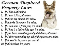GERMAN SHEPHERD DOG BREED SILLY PROPERTY LAWS