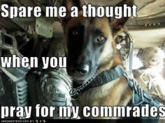 God bless our service dogs for their love and loyalty. :) They do a great deed for this country too, and need to be recognized for that as well as the men and women that serve.
