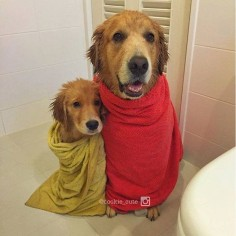 Golden bath time