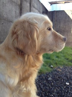 Golden profile
