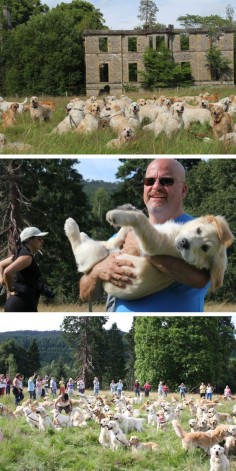 Golden Retriever Festival In Scotland. This is why I want to have a golden retriever. | Bucket List