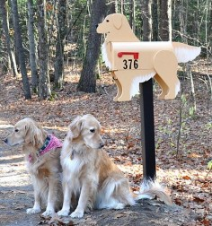 Golden Retriever mailbox with customers!