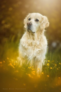 golden summer love II by Danny Block - Photo 154024879 - 500px