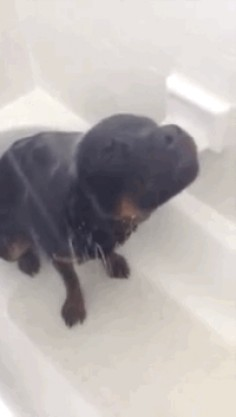 Good, clean fun for the whole family!   This Dog Loves Showering More Than You Love Anything