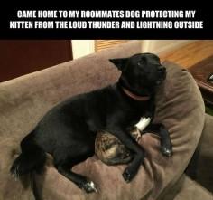 Good dog - Imgur