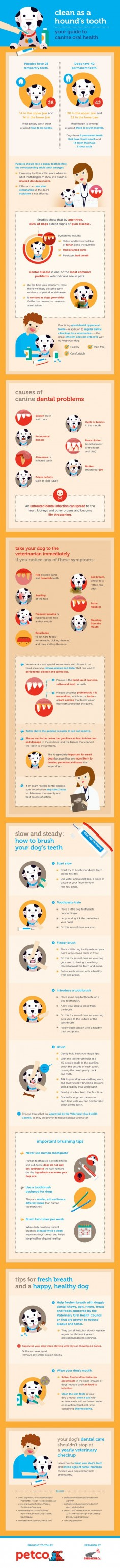 guide to canine oral health