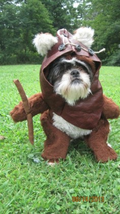 Hahaha! EWOK DOG!!  Dog Halloween Costume Size Medium or Large by sewdoggonecreative, $