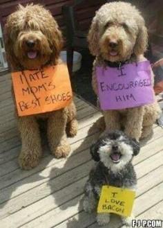 Hahahaha the little dog