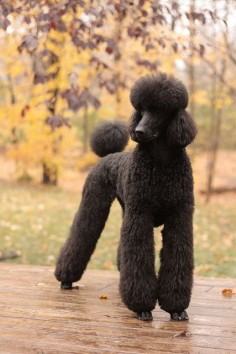 Hairtastic by SmartPoodle, via Flickr