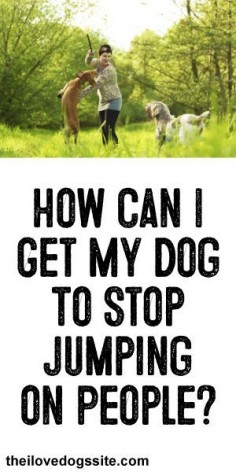 HELP!: How Can I get My Dog To Stop Jumping On People?
